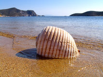 Sea shell,. Shellfish on a golden beach in a Greek island of Paros stock images