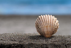 Sea shell. With ocean on background Stock Photography