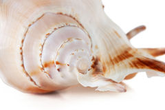 Sea shell. Isolated over white. Shallow depth of field Stock Photos