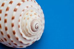 Sea shell. Stock Photo