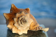 Sea shell. On a table over a water background, at sunset Stock Images