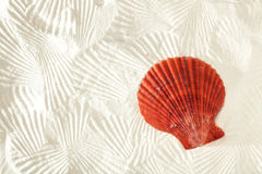 Free Sea Shell Royalty Free Stock Image - 18008786