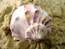 Sea Shell 2. One of nature's beautiful sea shells Stock Images