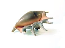 Sea shell (2) Royalty Free Stock Image