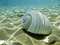 A sea shell. On a sandy sea bed royalty free stock images