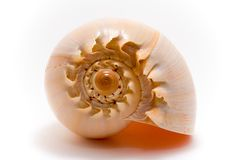 Sea Shell. Isolated on white background Royalty Free Stock Image