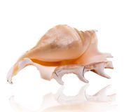Sea shell. Over white background Royalty Free Stock Photography