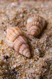 Sea shell. Different sea shells on sand Stock Photos