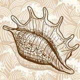 Sea shell. Original hand drawn illustration in vintage style Stock Photo