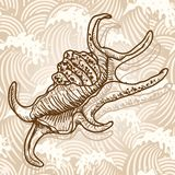 Sea shell. Original hand drawn illustration in vintage style Royalty Free Stock Photos