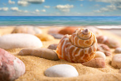 Sea shell. Close-up of sea shell on the beach stock photo