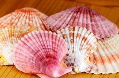 Sea shell. Stock Photos