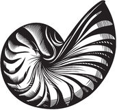 Sea shell. Illustration of sea shell. Black and white style Royalty Free Stock Images