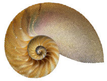 Sea shell. In a nice geometric figure Stock Images