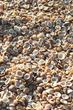 Sea shell. Big group of the skeleton of sea shell stock image
