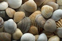 Sea shell 5. Close up of sea shells Stock Images