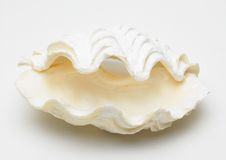 Sea shell. Single opened white sea shell in white background stock photos
