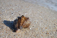 Sea shell. On a beach Stock Images