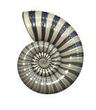 Sea shell. An illustration of a high detailed sea shell vector illustration