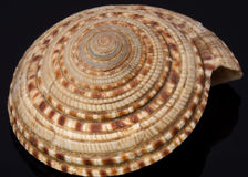 Sea shell. On black background Royalty Free Stock Photography