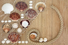 Sea Shell Abstract Stock Photos