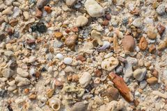 Free Sea Shell And Stone Pieces Texture Stock Photography - 43499502