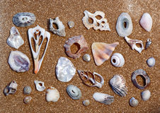 Sea shell arrangement. On golden sand Royalty Free Stock Images