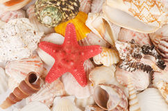 Sea Shell As A Background Royalty Free Stock Photography