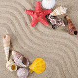 Sea shell as a background Stock Images