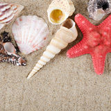 Sea shell as a background Royalty Free Stock Photos