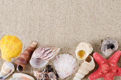 Sea shell as a background Royalty Free Stock Image