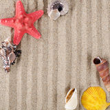 Sea shell as a background Royalty Free Stock Photo