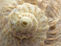 Sea shell as texture background Royalty Free Stock Photo