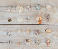 Sea Shell Assortment Stock Images