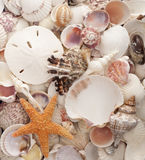 Sea Shell Background Royalty Free Stock Photos