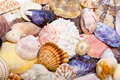 Sea Shell Background Stock Photo