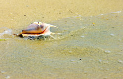 Sea shell background. Beach concept. Sea shell background Stock Image
