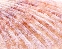 Sea shell background Stock Photos