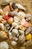 Sea Shell Background Stock Photography