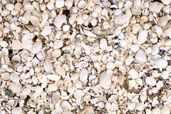 Sea Shell Background on the Beach. Outdoor stock image