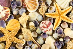 Sea shell background Royalty Free Stock Photo