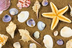 Sea shell background Royalty Free Stock Photography