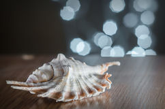 Sea shell on a background garlands. A seashell lies on a wooden table on a background of bokeh lights Stock Photo