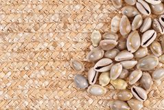 Sea Shell Background Image Royalty Free Stock Images