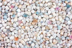 Sea shell background Royalty Free Stock Images