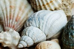 Sea shell background pattern Royalty Free Stock Images