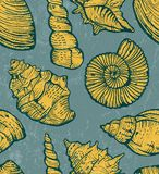 Sea shell background. Stock Photo