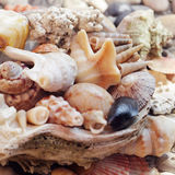 Sea shell background Royalty Free Stock Image