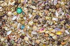 Sea Shell Background Stock Images
