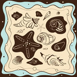 Sea shell background, vector illustration. Frame vector illustration